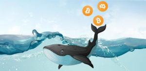 Whale bitcoins